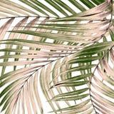 Foglie verdi della palma isolate su bianco Fotografia Stock Libera da Diritti