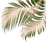 Foglie verdi della palma su bianco Fotografia Stock Libera da Diritti