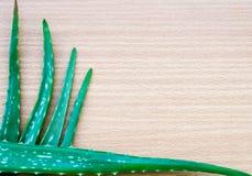 Foglie verdi della pianta dell'aloe Fotografie Stock Libere da Diritti