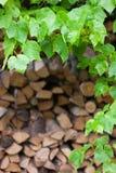 Foglie verdi delle piante selvatiche sui precedenti dei ceppi di legno Fotografia Stock