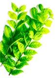 Foglie verdi di bella struttura e gialle astratte dell'albero isolate sul modello e sulla carta da parati bianchi del fondo fotografie stock