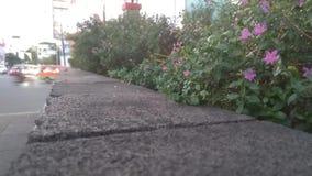 Foglie verdi di piccole piante nel vento con un video di effetto di periodo di tempo video d archivio
