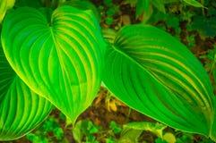 Foglie verdi di un fiore nella giungla Fotografie Stock