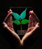 Foglie verdi dipinte vetro fotografia stock libera da diritti