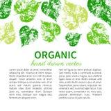 Foglie verdi disegnate a mano isolate su bianco, foglia dell'impronta del bollo, carte, insegne, fondo dell'incisione del grafico illustrazione di stock