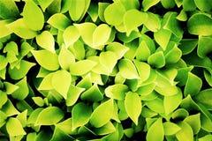 Foglie verdi e gialle fondo, processo con il filtro Fotografia Stock Libera da Diritti