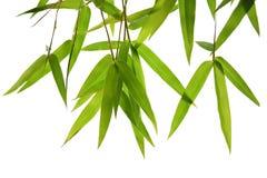 Foglie verdi e rami del bambù isolati su fondo bianco che taglia Fotografia Stock