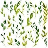 Foglie verdi e rami dell'acquerello di vettore illustrazione di stock