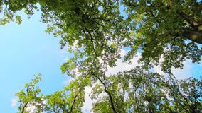 Foglie verdi e rami sull'albero che ondeggia nel vento archivi video