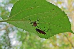 Foglie verdi ed insetti il giorno soleggiato fotografie stock libere da diritti