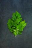 Foglie verdi fresche degli spinaci isolate sulla pietra grigio scuro dell'ardesia Fotografia Stock