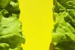Foglie verdi fresche dell'insalata della lattuga su fondo giallo Fotografia Stock