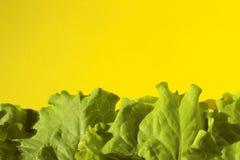 Foglie verdi fresche dell'insalata della lattuga su fondo giallo Immagine Stock Libera da Diritti