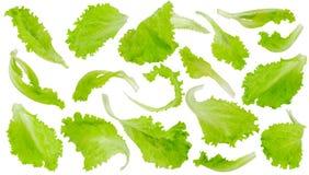 Foglie verdi fresche della lattuga su fondo bianco Immagine Stock