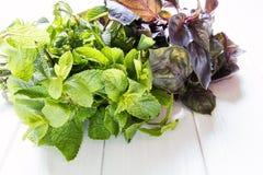 Foglie verdi fresche della menta e del basilico Fotografia Stock