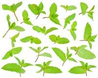Foglie verdi fresche della menta piperita Fotografia Stock Libera da Diritti
