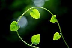 Foglie verdi fresche per gli ambiti di provenienza Fotografie Stock