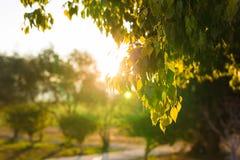 Foglie verdi fresche sulla natura che incornicia il sole nel mezzo e che forma i raggi di luce Fotografia Stock Libera da Diritti