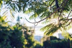 Foglie verdi fresche sulla natura che incornicia il sole nel mezzo e che forma i raggi di luce Immagini Stock