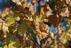 Foglie verdi gialle dell'estremità di autunno al sole fotografia stock