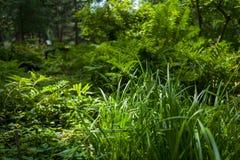 Foglie verdi in giardino botanico Fotografia Stock