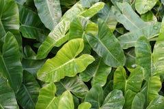 Foglie verdi lunghe nel giardino fotografia stock