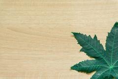 Foglie verdi minime su fondo di legno immagine stock