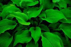 Foglie verdi misteriose Immagine Stock