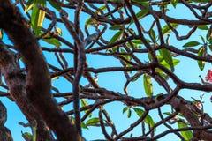 Foglie verdi naturali sul fondo del cielo Fotografie Stock Libere da Diritti