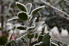 Foglie verdi nell'inverno Fotografie Stock