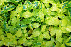 Foglie verdi nella pioggia Immagini Stock Libere da Diritti