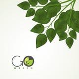 Foglie verdi per la natura Immagine Stock