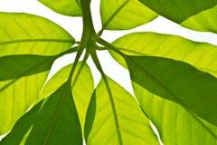 Foglie verdi piacevoli Fotografie Stock