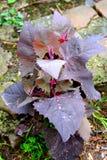 Foglie verdi in primavera in giardino Gocce di acqua Fotografie Stock
