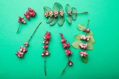 Foglie verdi, ramoscelli e bacche su un fondo verde Un modello delle piante e della natura immagine stock libera da diritti