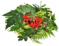 Foglie verdi, semi rossi e ghiande Immagine Stock