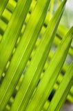 Foglie verdi strette lunghe inclinate Immagini Stock Libere da Diritti