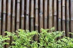 Foglie verdi su bambù Immagini Stock