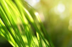 Foglie verdi su sole, fondo astratto del bokeh fotografia stock libera da diritti