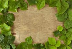 Foglie verdi su un fondo di legno Fotografia Stock Libera da Diritti