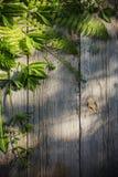 Foglie verdi su vecchio fondo di legno Fotografia Stock