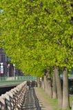 Foglie verdi sugli alberi nella città Immagini Stock