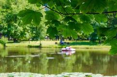 Foglie verdi sugli ambiti di provenienza del lago Fotografia Stock Libera da Diritti