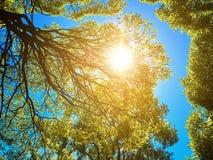 Foglie verdi sull'albero e sul sole in un cielo blu Fotografie Stock
