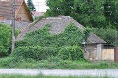 Foglie verdi sulla casa Fotografia Stock Libera da Diritti