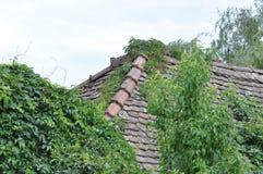 Foglie verdi sulla casa Fotografie Stock Libere da Diritti