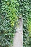 Foglie verdi sulla casa Fotografia Stock