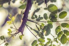 Foglie verdi in un ramo di albero Immagini Stock