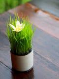 Foglie verdi in una tazza Fotografie Stock