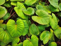 Foglie verdi vibranti nel giardino Immagine Stock Libera da Diritti